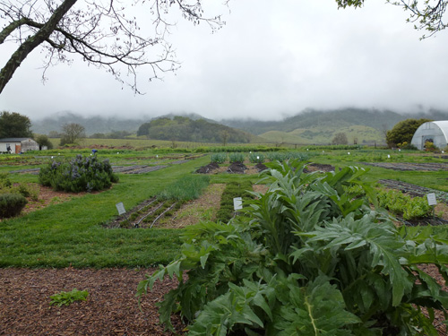 Taste of Yountville - French Laundry Garden