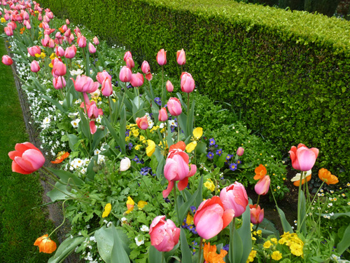Taste of Yountville - Tulips at the Vintage Inn